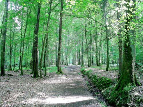bosque-troncais-1747-1_w600